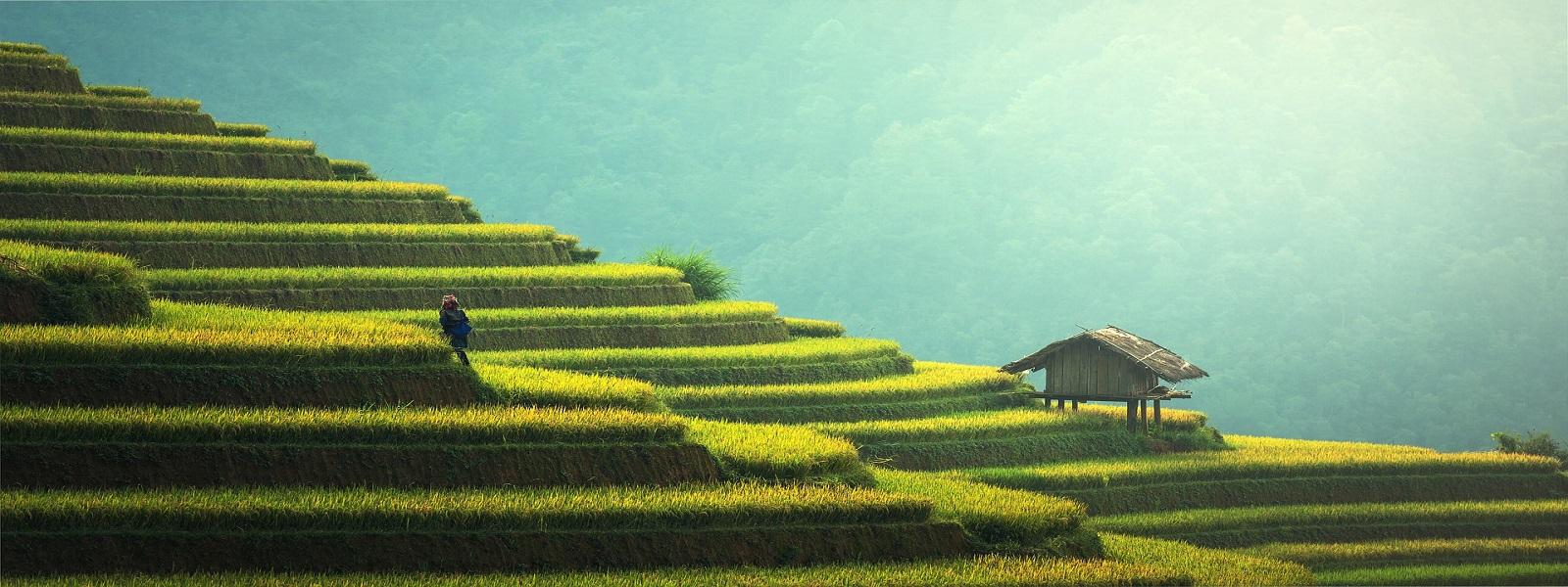 Vietnam Visa Immigration