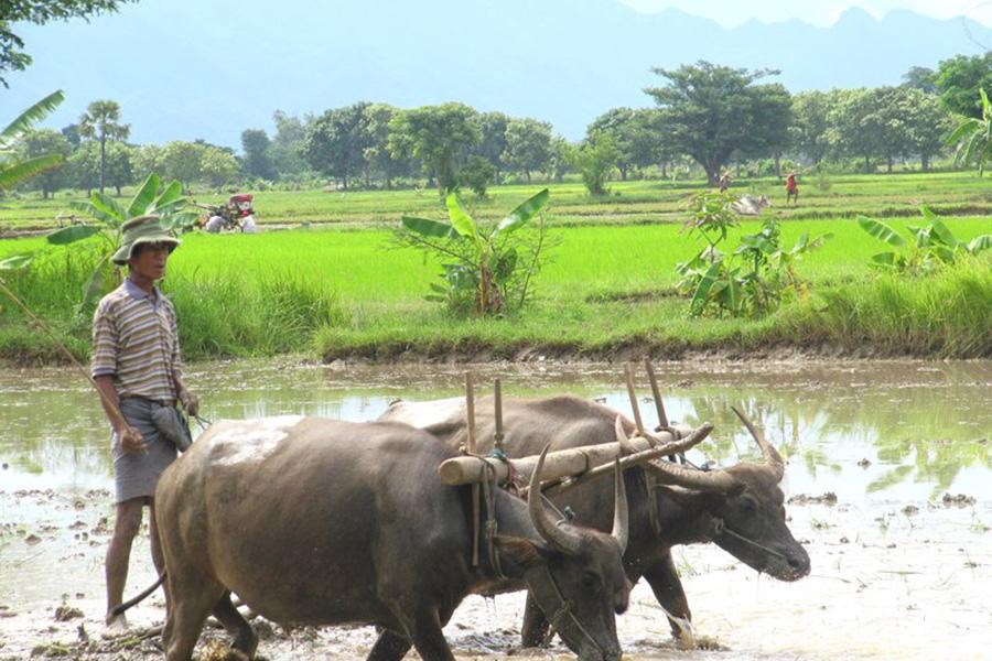 GRAND OF BURMA (MYANMAR)
