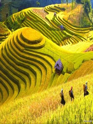 GLIMPSE OF NORTH VIETNAM